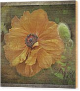 Burnished Poppy Wood Print