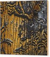 Burnt Beetle Maze  #9991 Wood Print