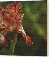 Burnt Orange Iris Wood Print