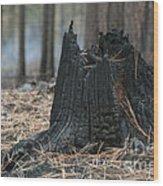 Burnt Tree Trunk Wood Print