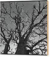 Burr Oak Beauty Wood Print