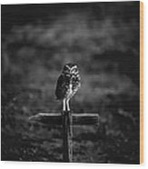Burrowing Owl At Dusk Wood Print by Kelly Gibson