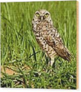 Burrowing Owl At It's Burrow Wood Print