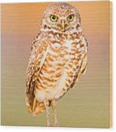 Burrowing Owl II Wood Print