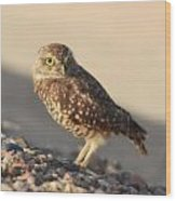 Burrowing Owl II Wood Print