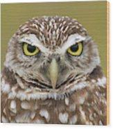 Burrowing Owl, Kaninchenkauz Wood Print