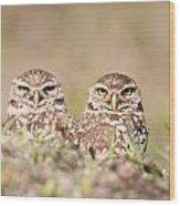 Burrowing Owl Pair Wood Print