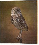 Burrowing Owl Portrait Wood Print by Kim Hojnacki