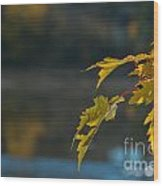 Burst Of Gold Wood Print