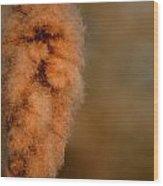 Bursting Cattail Seed Wood Print