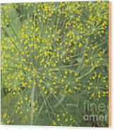 Bursting Dill Plant Wood Print