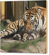 Busch Tiger Wood Print