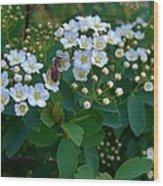 Bush Blossums With Bee Wood Print