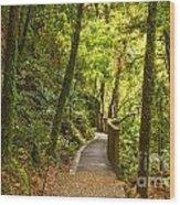 Bush Pathway Waikato New Zealand Wood Print