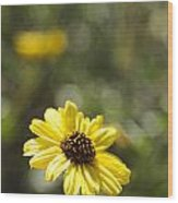 Bush Sunflower 1 Wood Print