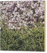 Bush With The Background In Cherry Klarenbeek Park In Arnhem Netherlands Wood Print