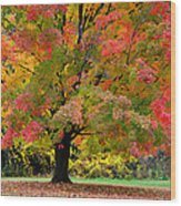 Busse Woods Fall Color Wood Print