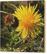 Bussy Bee And Dandelion Wood Print