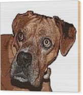 Buster Brown The Boxer Wood Print by Sandra Clark