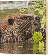 Busy As A Beaver Wood Print
