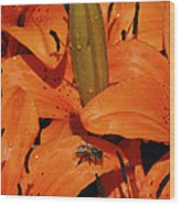 Busy Bee - 774 Wood Print
