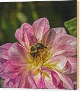 Busy Bee Wood Print