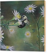 Busy Bee - Nature Scene Wood Print by Prashant Shah