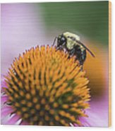 Busy Bee On Cone Flower Wood Print