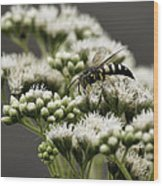Busy Bee On White Wood Print