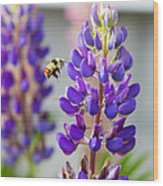 Busy Bumble Bee Wood Print