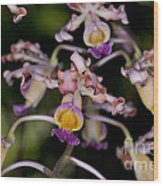 Busy Orchids Wood Print