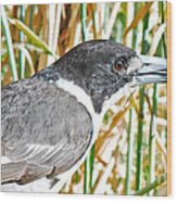 Butcherbird Wood Print