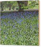 Bute Park Bluebells Wood Print
