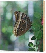 Buterfly 4 Wood Print