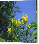 Butter And Egg Wildflower Wood Print