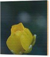 Butter Cup Flower Wood Print