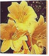 Butter Yellow Lilly Cluster Wood Print
