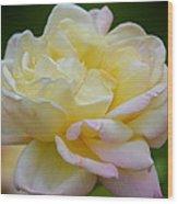 Buttercream Blush Wood Print