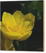 Buttercup And Dew Drops Wood Print