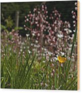 Buttercup And Wildflowers Wood Print