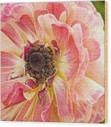 Buttercup Blossom Wood Print