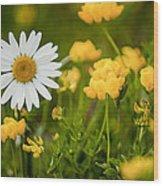 Buttercup Daisy Wood Print