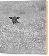 Buttercup In Black-and-white Wood Print by JD Grimes