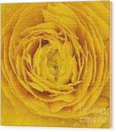 Buttercup Macro Wood Print