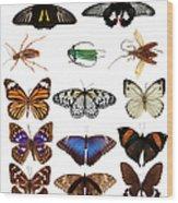 Butterflies And Beetles Wood Print
