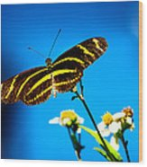 Butterflies And Blue Skies Wood Print