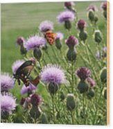 Butterflies And Bull Thistle Wildflowers Wood Print