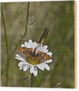 Butterflies And Daisy In A Yosemite Meadow Wood Print