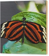 Butterflies Are Free Wood Print