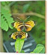 Butterflies Gentle Courtship  3 Panel Composite Wood Print